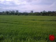 Pozemky na sídlisku Mier v SNV