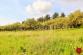 Stavebné pozemky (6074 m2), Levoča - 9