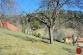 RD s veľkým pozemkom (2413m2), Levoča - 4