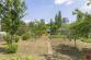 Dve záhrady (770 m2) pri sídl. Juh Poprad - 9