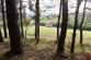 Pozemok (1100 m2) Oľšavka pri Spišských Vlachoch - 5